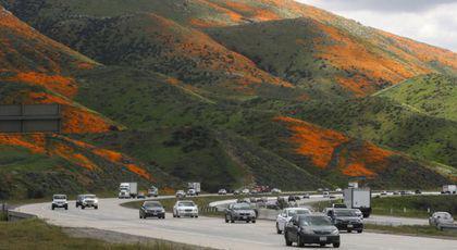 """""""Apocalipsa Macilor"""" a dat peste cap un orăşel din California"""
