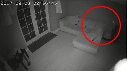 Un britanic care a montat camere de supraveghere pentru a-și ține sub observație câinii a avut o surpriză de proporții când a privit înregistrările