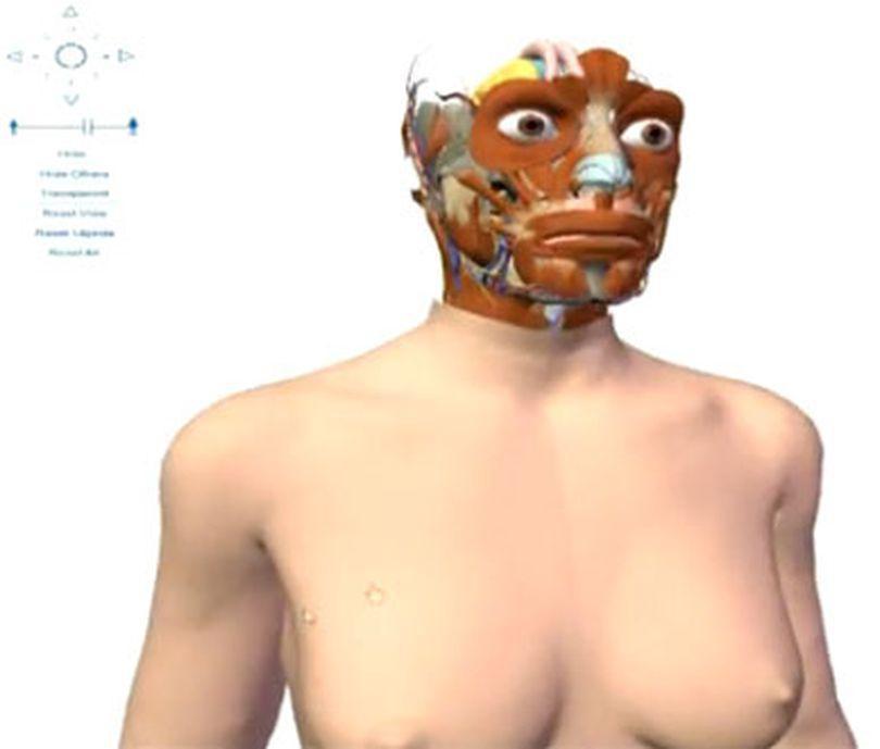 Video | Google Body: Noua hartă a corpului omenesc, în format 3D