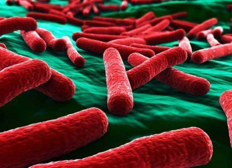 Ultimul bilanţ al epidemiei E.coli: 35 de morţi